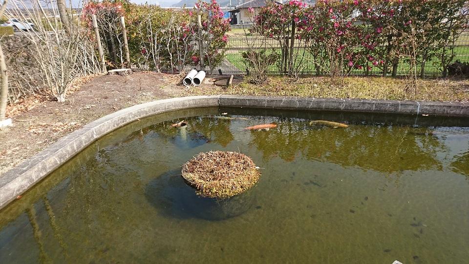 鯉たちが泳ぐ池。