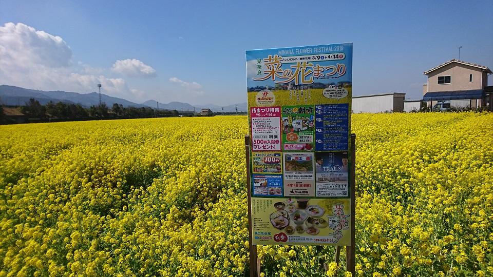 菜の花まつりの看板。後ろには見渡し限りの菜の花が見える。