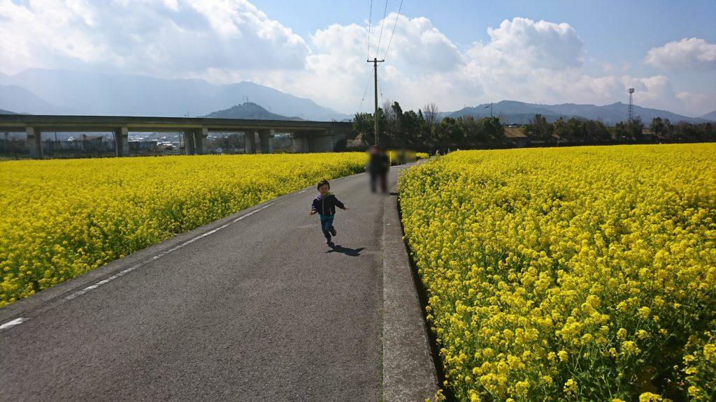 菜の花畑に挟まれた道を走る息子。車の通行はほとんどない。