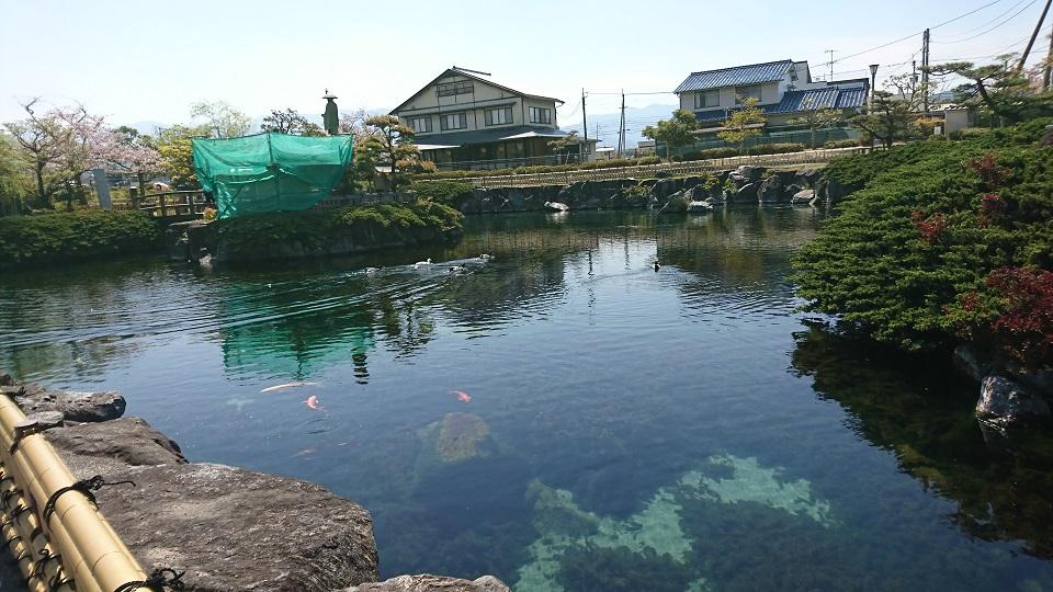 水郷の所以たる湧き水の溜まった池。