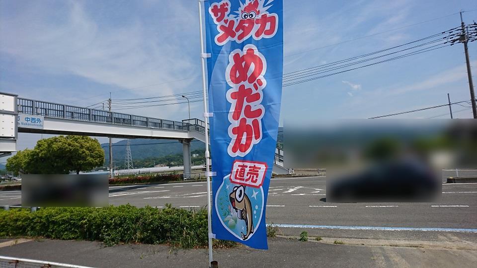 ザ・メダカ、「めだか直売」と書かれた幟が国道沿いに立っている。