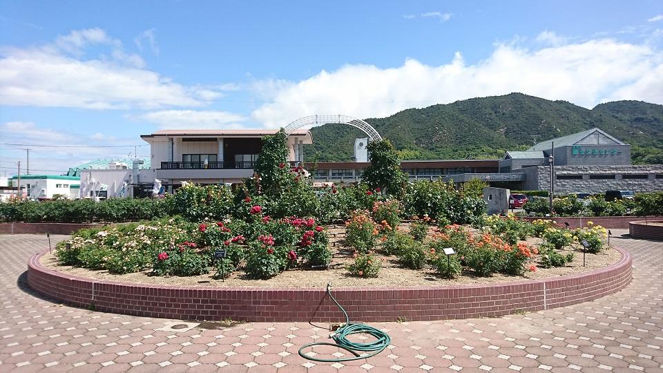 よしうみバラ園の中心地。奥にはローズ館と吉海郷土文化センターが見える。
